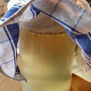 Kombuchasvamp, kombucha, fermentering