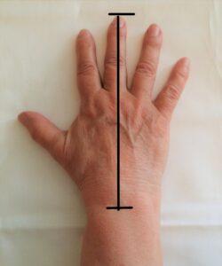 Handens längd